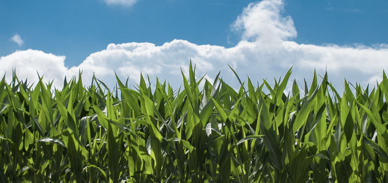 Fundamental Field Crop Data