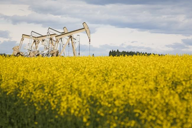 Pumpjacks draw oil out of the ground in a canola field near Olds, Alta., Thursday, July 16, 2020. One year after oil prices crashed to their first and only negative close during a perfect storm of energy demand bad news, Canada's oilpatch is poised to report a first-quarter gusher of cash flow thanks to a dramatic recovery in global demand. THE CANADIAN PRESS/Jeff McIntosh