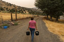 Misty Buckley carries dirty water from her animals' pens to water plants in her front yard, Saturday, July 24, 2021, in Klamath Falls, Ore. The Buckley's house well ran dry in May following an historic drought in southern Oregon. Dozens of domestic wells have gone dry in an area near the Oregon-California border where the American West's worsening drought has taken a particularly dramatic toll. (AP Photo/Nathan Howard)
